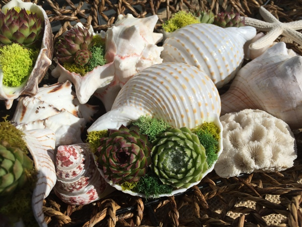 wholesale seashells