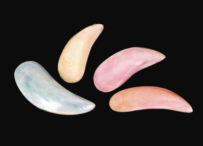Dyed Banana Clam - Pairs