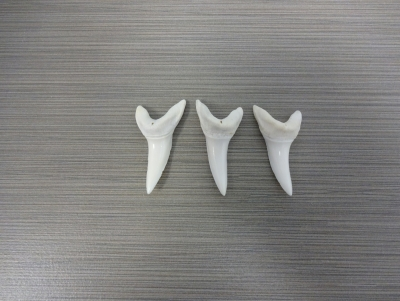 Mako Shark Teeth