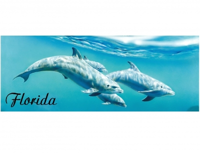 1586 - Beach Towel Dolphin Design