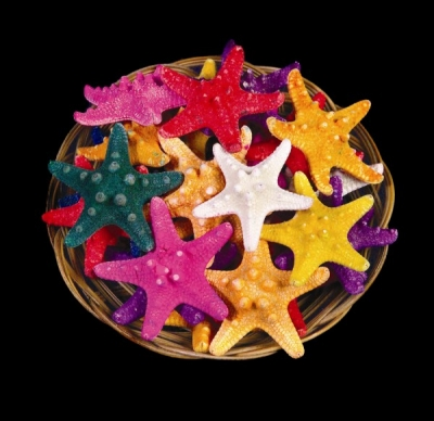 Multi Colored Dyed Knobby Starfish Basket 6""