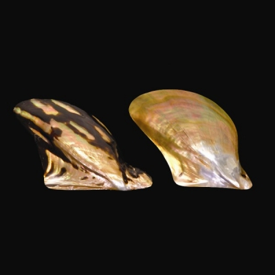 Polished Wing Oyster Shell